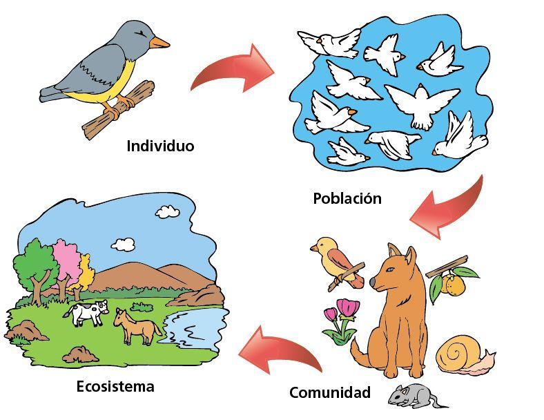 Individuo Población Comunidad Escolar Abc Color